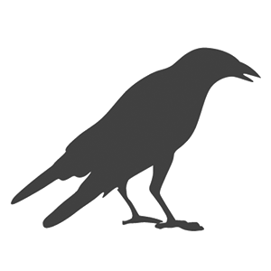 Raven / Crow Bird