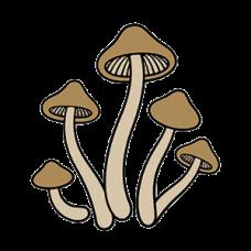 Mushrooms Tall