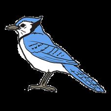 Blue Jay Bird
